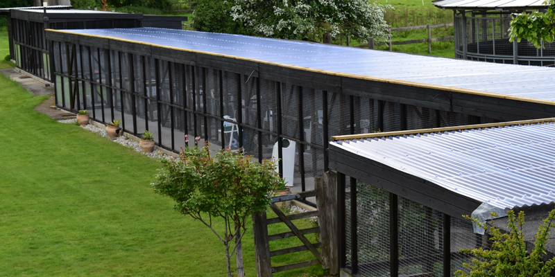 Image-showing-new-roofing-of-boarding-cattery-units